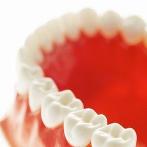 Close-up of model teeth