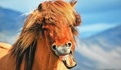 paardentandheelkunde