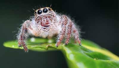 Is een wortelkanaalbehandeling enger dan een spin