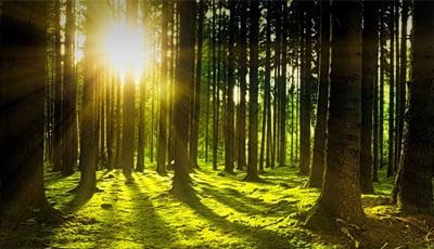 """Naamsaanduidigen in mondzorg: """"Door de bomen het bos niet meer zien?"""""""