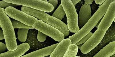 De rol van schimmels, archaea, protisten en virussen bij parodontitis: een update