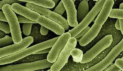 Goede mondgezondheid beter dan antibiotica om endocarditis te voorkomen; geen herziening AHA-richtlijnen nodig
